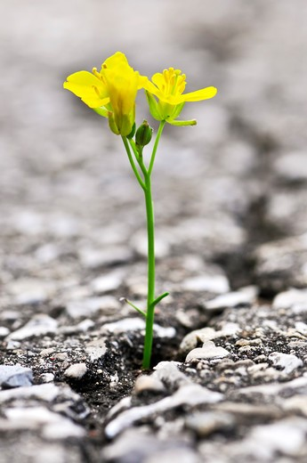 Green grass growing from crack in old asphalt pavement : Stock Photo