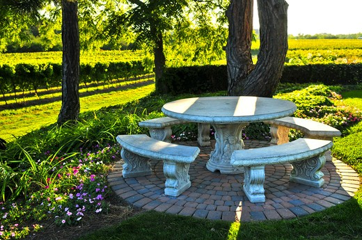 Benches and table near vineyard at winery : Stock Photo