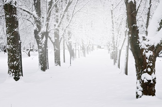 Lane in winter park with snow covered trees : Stock Photo