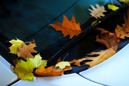 Stock Photo: 4183R-3742 Fallen autumn leaves on the windshield of a car