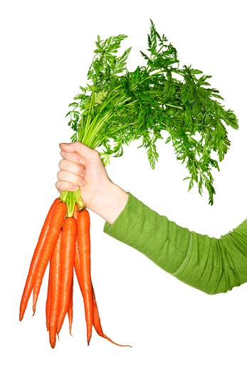 Woman's hand holding bunch of whole fresh organic orange carrots : Stock Photo