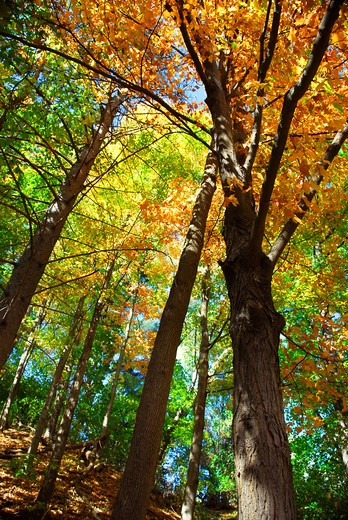 Colorful fall forest on a warm autumn day : Stock Photo
