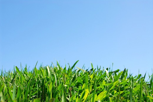 Stock Photo: 4183R-6251 Grass and sky background