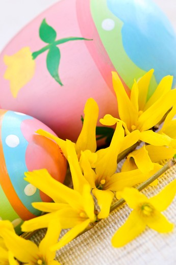 Easter eggs arrangement with yellow forsythia flowers : Stock Photo