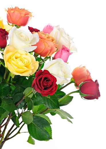 Stock Photo: 4183R-8856 Bouquet of assorted multicolored  roses isolated on white background