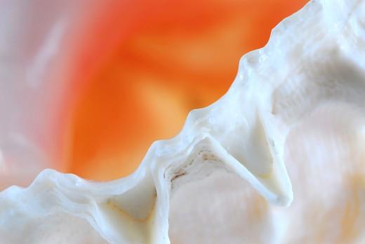 Extreme macro image of a seashell fragment : Stock Photo