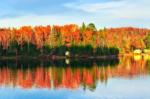 Forest of colorful autumn trees reflecting in calm lake : Stock Photo