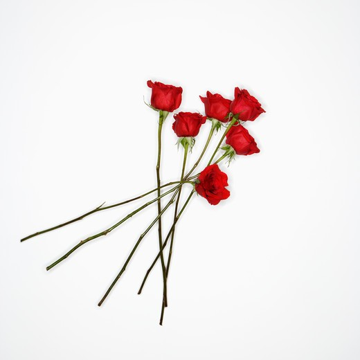 Long-stemmed red roses spread out against white background. : Stock Photo