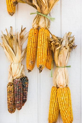 Fall corn decorations. : Stock Photo