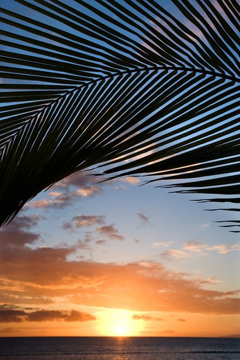 Sunset sky framed by palm fronds over the Pacific Ocean in Kihei, Maui, Hawaii, USA. : Stock Photo