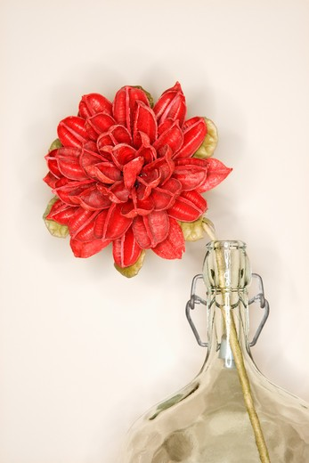 Stock Photo: 4184R-2751 Still life shot of a dried red lower in glass jug.