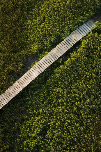 Wooden boardwalk over wetlands. : Stock Photo