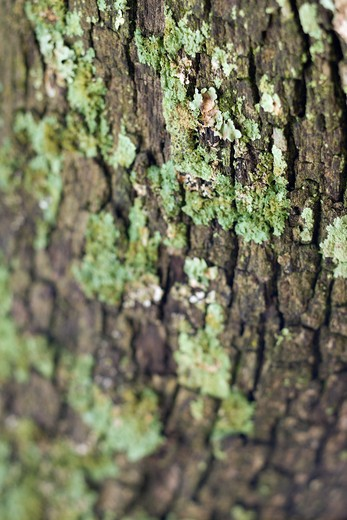 Close-up of moss growing on tree bark. : Stock Photo