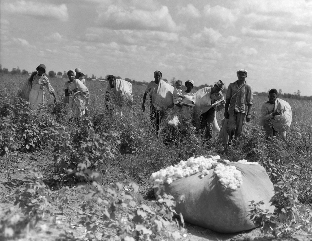 Stock Photo: 4186-1655 1930S Group Of African American Workers With Bags Of Cotton In Field Louisiana Outdoor