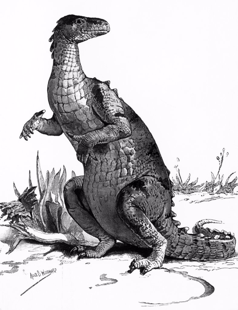 Engraving Of Dinosaur Iguanodon : Stock Photo