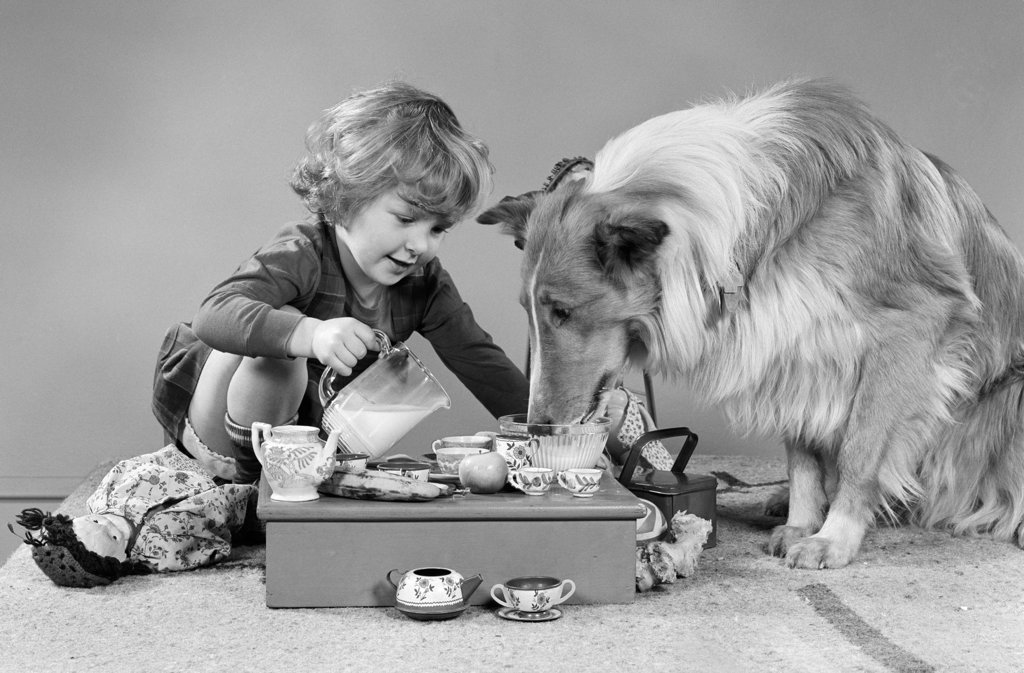 Little Girl Pouring Milk At Tea Party For Collie Dog Studio : Stock Photo