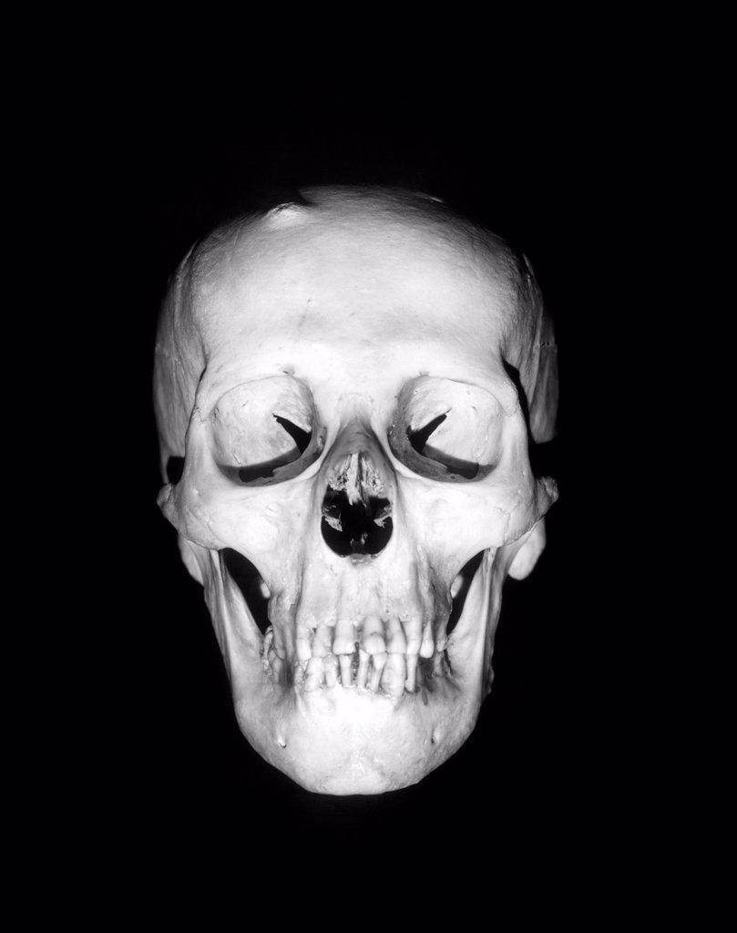 Stock Photo: 4186-2906 Still-Life Of Skull Floating In Black Background