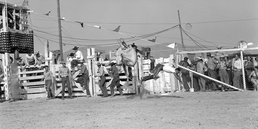 Stock Photo: 4186-3141 1950S Cowboy Falling Off White Bucking Bronco Horse Barstow Rodeo 1953 Danger Accident Balance Fall