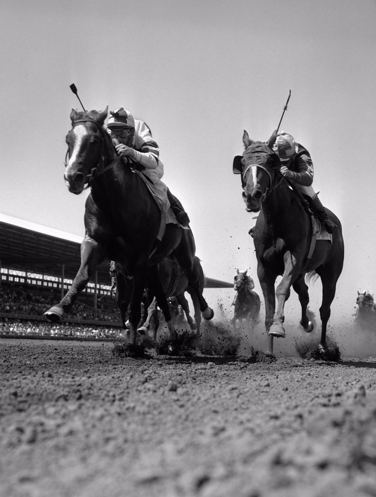 Stock Photo: 4186-3197 1960S Worm'S-Eye View Of Horse Race With 2 Leaders Galloping Toward Camera