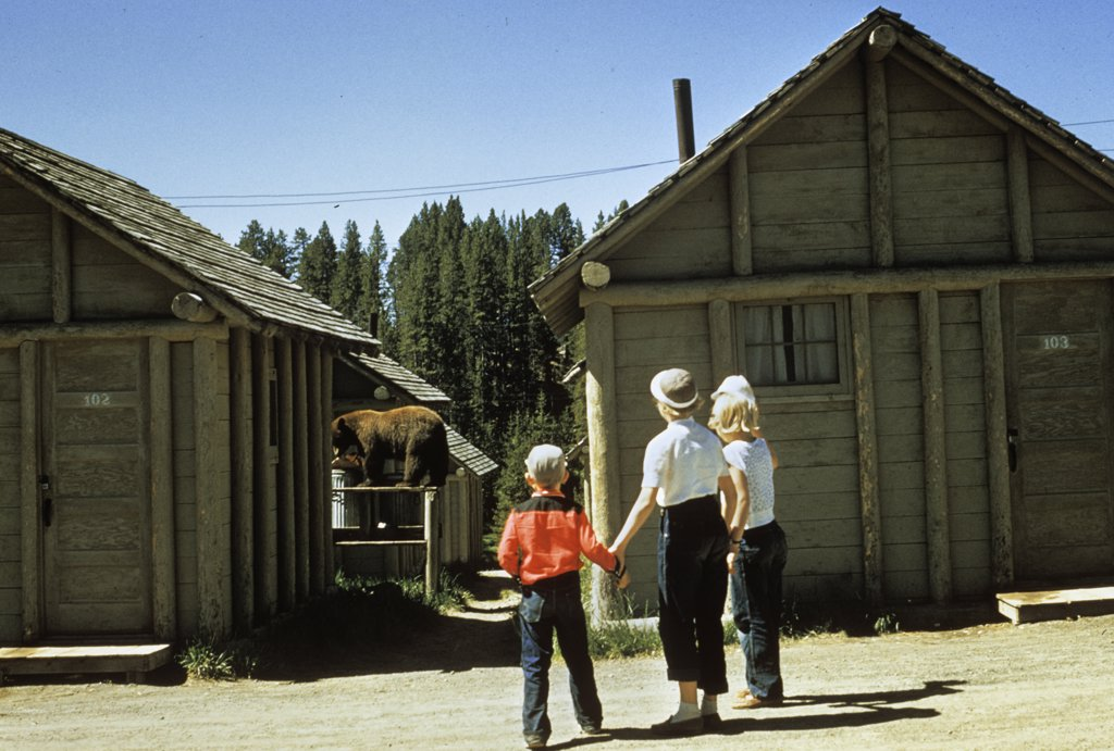 Stock Photo: 4186-7514 1950S Mother And Children Visiting Yellowstone National Park Wyoming 1956, Looking At Bear Behind Cabins