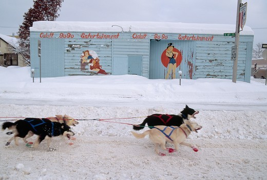 Dogsled Team Running Past Strip Club : Stock Photo