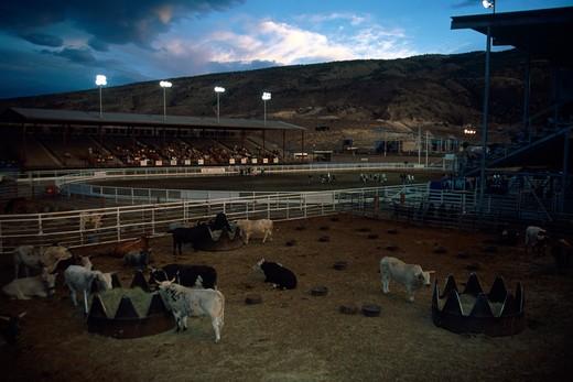 Rodeo, South Dakota, USA : Stock Photo