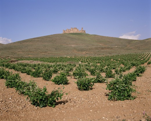 La Mancha, Castilla, Spain : Stock Photo