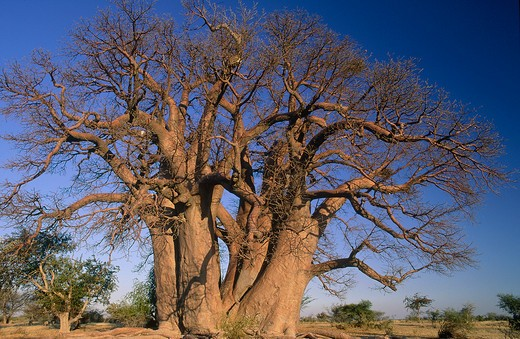 Stock Photo: 4192-7751 Magkadigkadi Pans, Botswana