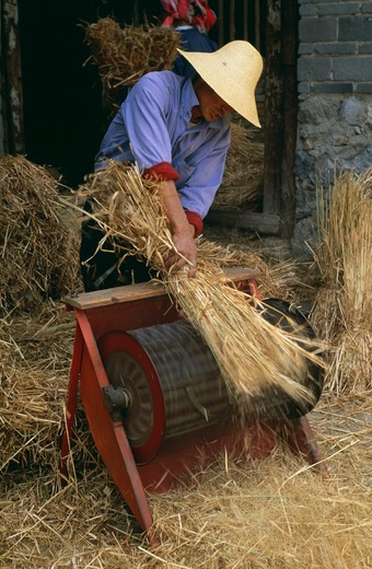 Threshing, Yunnan, China : Stock Photo