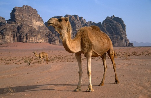 Wadi Rum, Jordan : Stock Photo