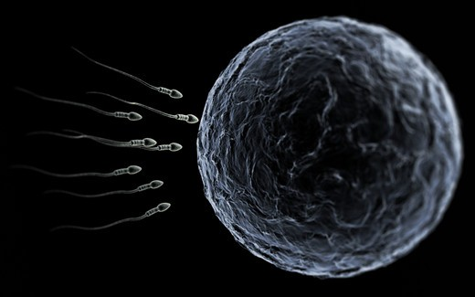 Stock Photo: 4193R-1544 Sperm swimming toward the egg at a microscopic zoom over black