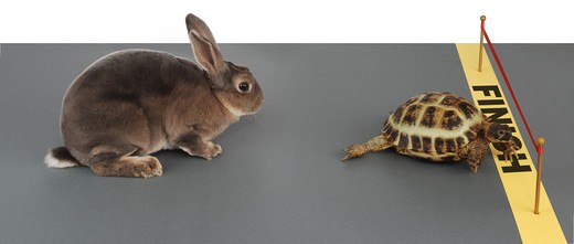 turtle winning the race against a rabbit : Stock Photo