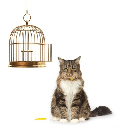 Stock Photo: 4193R-363 Cat with a full mouth sitting next to an empty bird cage