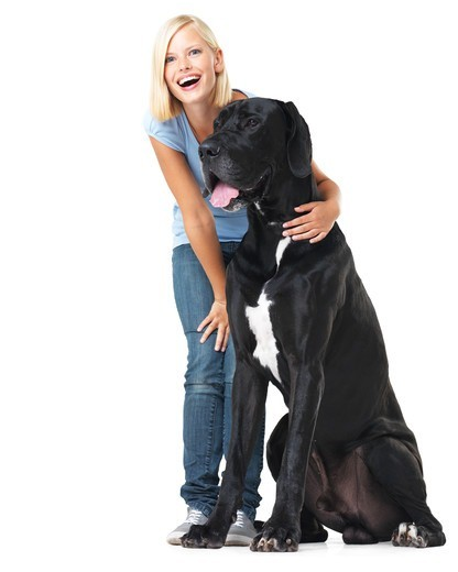 Laughing young woman isolated on white while alongside a huge great dane - portrait : Stock Photo