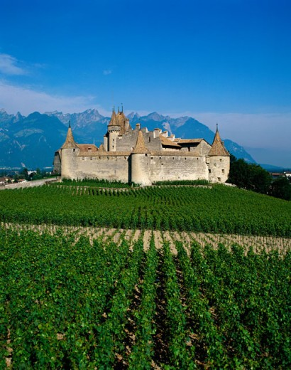 Stock Photo: 42-2322C Vineyards in front of a castle, Aigle Castle, Switzerland
