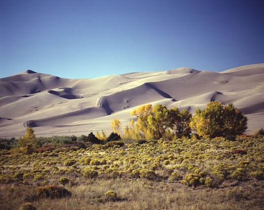 Stock Photo: 42-2395 Trees in front of sand dunes, Great Sand Dunes National Monument, Colorado, USA