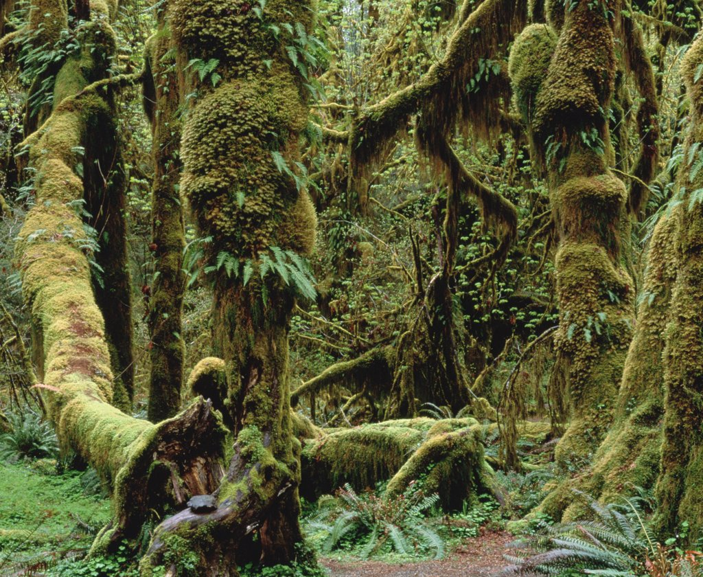 Temperate rainforest vegetation, southeast Alaska : Stock Photo