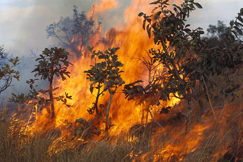 Savannah fire, Cerrado ecosystem, Brazil : Stock Photo