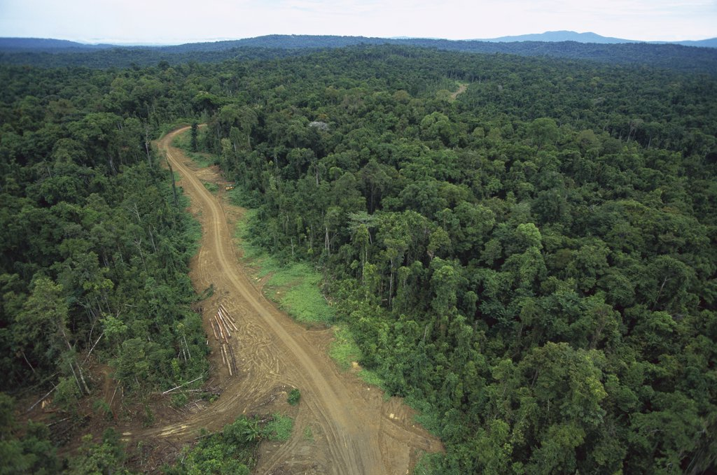 Logging road in lowland tropical rainforest across the broad flood plain of Aird River, Kikori Basin, Papua New Guinea : Stock Photo