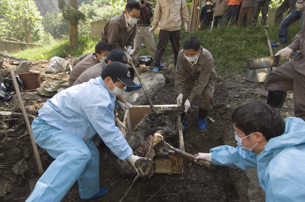 Stock Photo: 4201-32609 Giant Panda (Ailuropoda melanoleuca) recovery effort, workers collecting Mao Mao's body after the May 12, 2008 earthquake and landslides, CCRCGP, Wolong, China