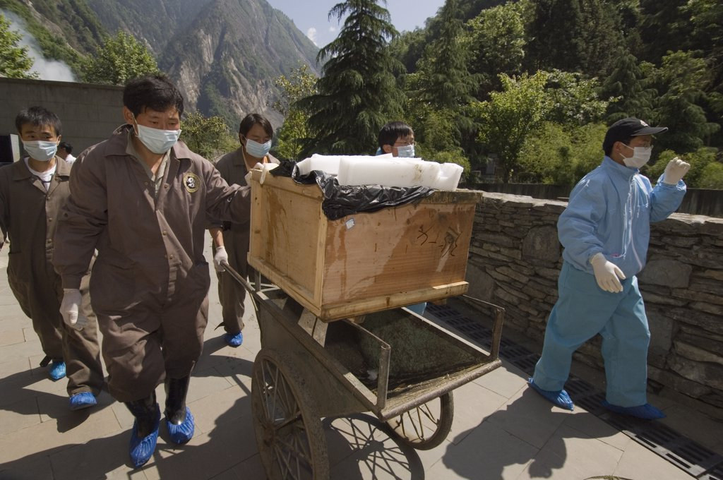 Stock Photo: 4201-32616 Giant Panda (Ailuropoda melanoleuca) recovery effort, Mao Mao's coffin being taken to gravesite after May 12, 2008 earthquake and landslides, CCRCGP, Wolong, China