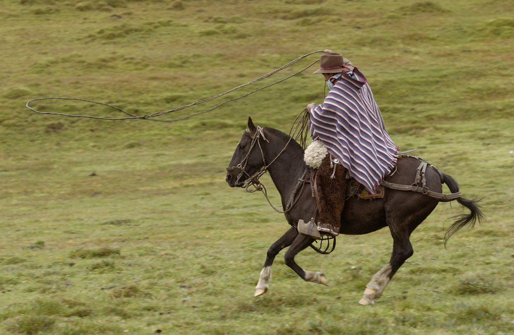 Chagra cowboy riding fast on his Domestic Horse (Equus caballus) over Paramo grassland with his lasso at a hacienda during the annual cattle round-up, Andes Mountains, Ecuador : Stock Photo