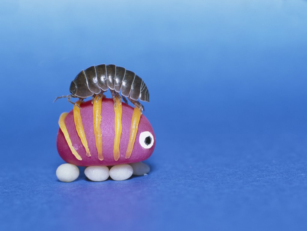Stock Photo: 4201-3552 Common Pillbug (Armadillidium vulgare) atop a toy replica, worldwide distribution