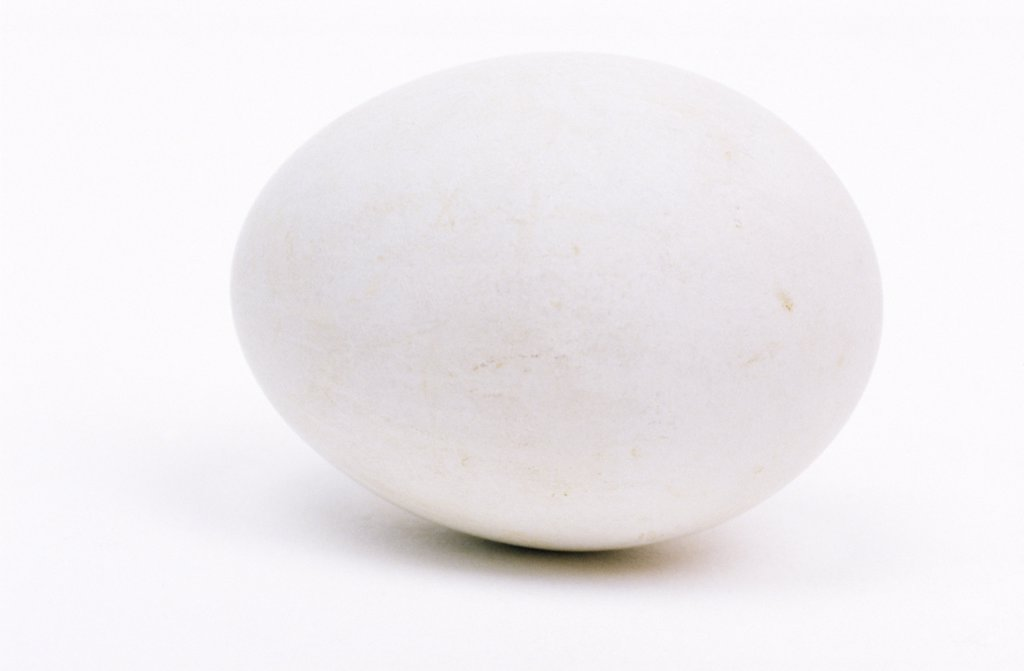 Stock Photo: 4201-39432 Northern Harrier (Circus cyaneus) egg, Europe