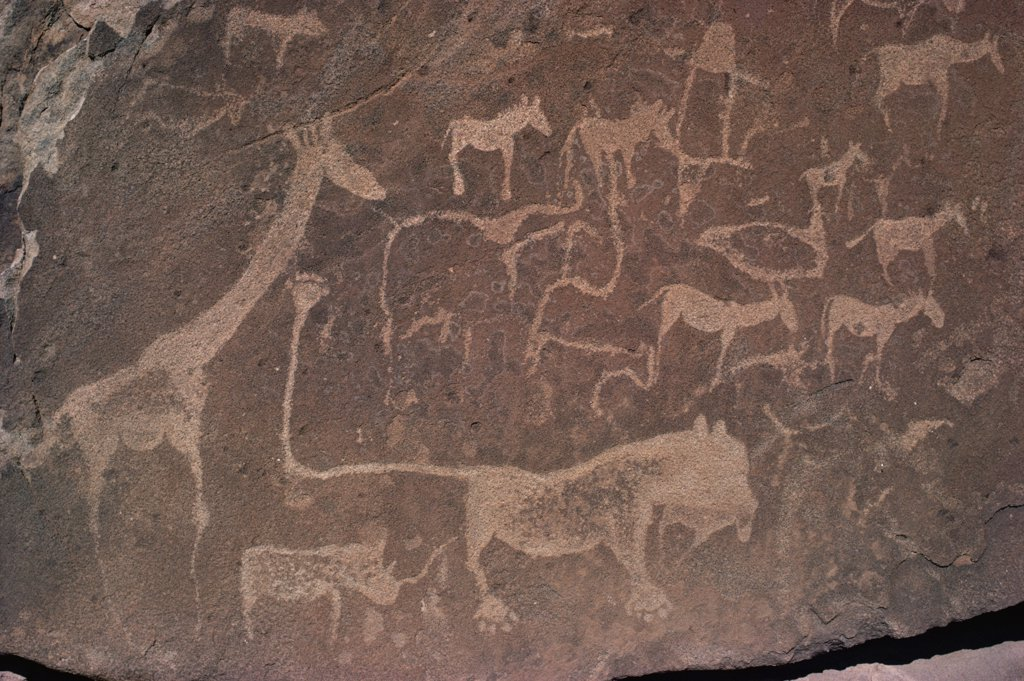 Stock Photo: 4201-43460 Petroglyphs of animals hunted by bushmen, Twyfelfontein, Namibia