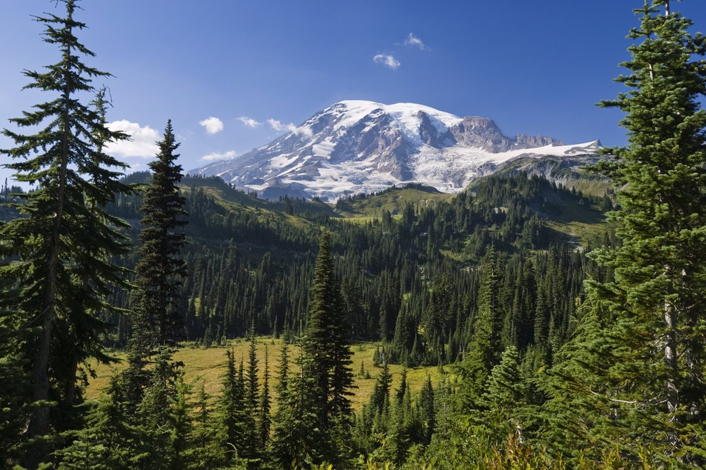 Stock Photo: 4201-43520 Mount Rainier with coniferous forest, Washington