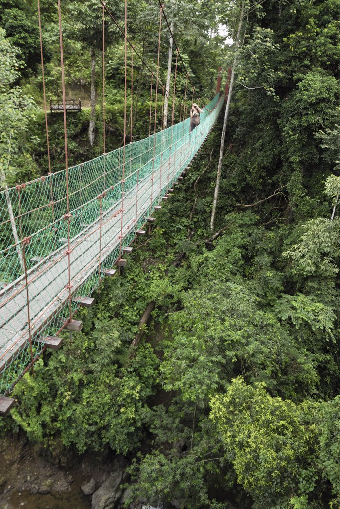 Stock Photo: 4201-46571 Tourist on suspension bridge in rainforest, Danum Valley Conservation Area, Borneo, Malaysia