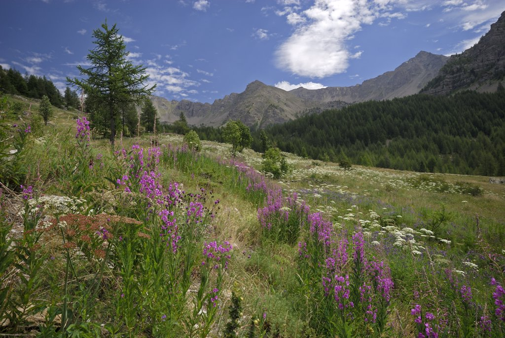 Mountain meadow, France : Stock Photo