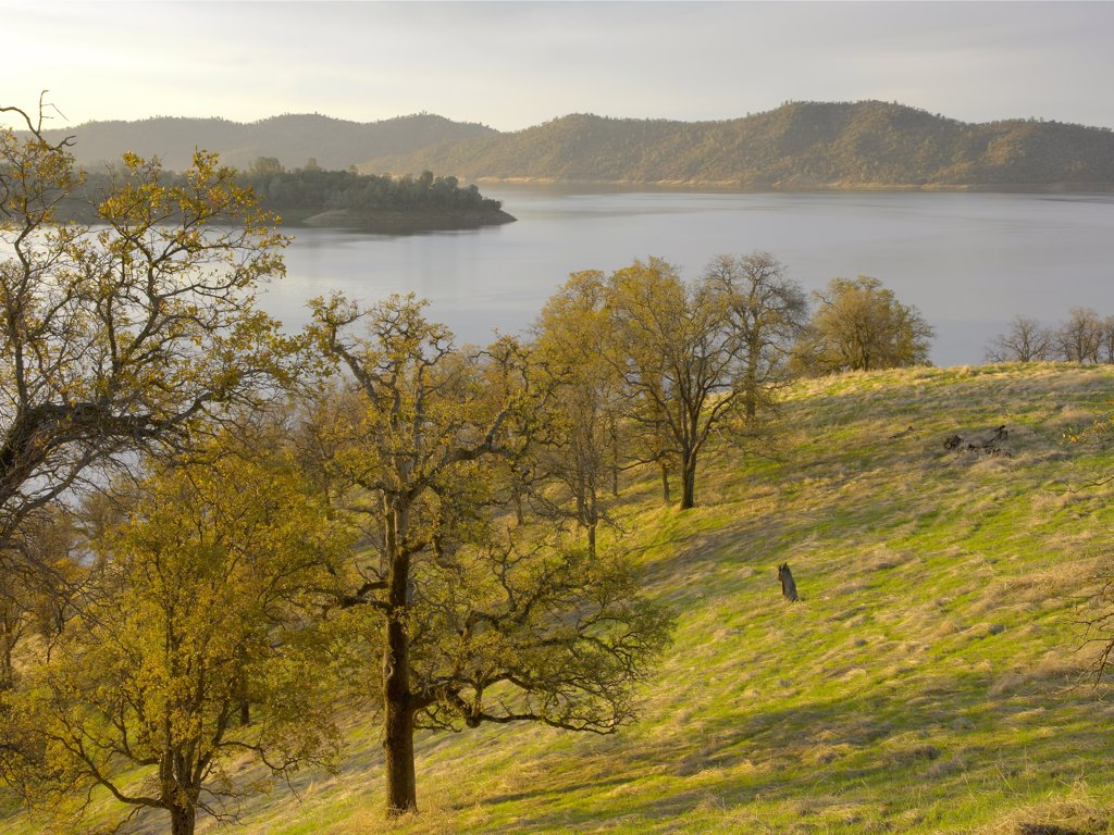 New Melones Lake surrounded by foothill Oak woodlands, man-made reservoir managed by Central Valley Project, Calaveras County, California : Stock Photo