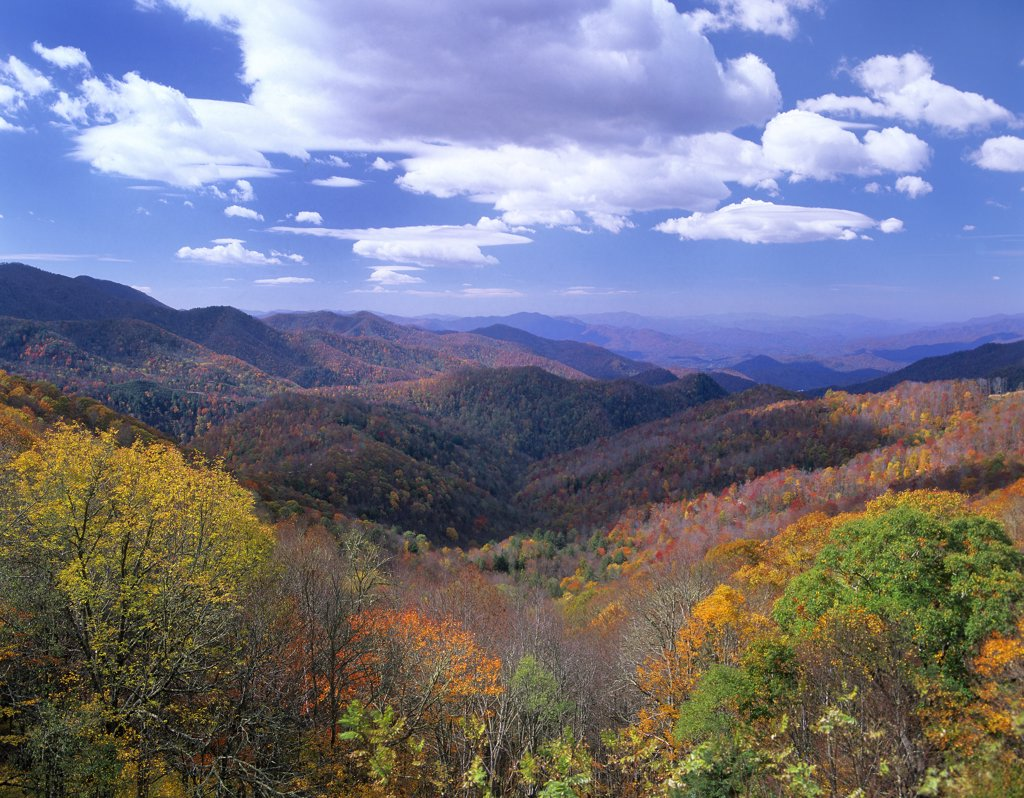 Stock Photo: 4201-6942 Deciduous forest in the autumn from Thunderstruck Ridge Overlook, Blue Ridge Parkway, North Carolina